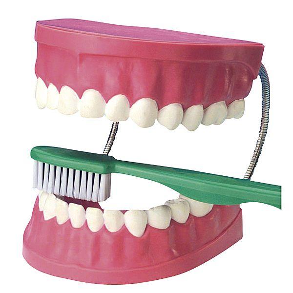 Zahnpflegemodell